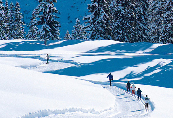 Cross-country ski